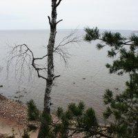 Форт Красная Горка. Вид от мемориала на Финский залив :: Елена Павлова (Смолова)
