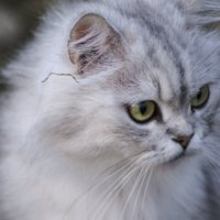 Кошка :: Анна Чивикова