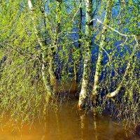 Ещё течёт река апрелем... :: Лесо-Вед (Баранов)