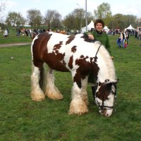Хорош ирландец. Конь. :: Николай Дони