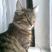 Алиса наблюдает . :: Мила Бовкун
