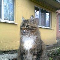 Кошка . :: Мила Бовкун