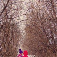 Прогулка зимой :: Аnastasiya levandovskaya