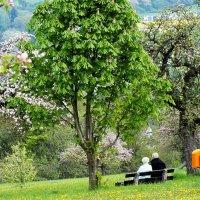 Весна :: serega.r Романов