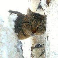 Соседский Барсик. :: Кристина Девяткина