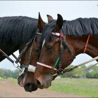 Лошадь - это ангел, спустившийся с небес. :: Anna Gornostayeva