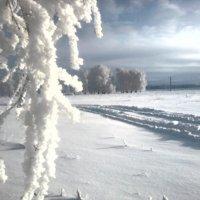 На обочине Зимы... :: Кристина Девяткина