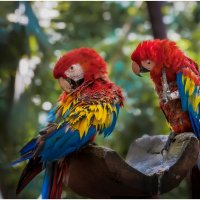 А ты меня любишь??? ...ЛЮБЛЮ...парк птиц...Куала Лумпур.Малайзия. :: Александр Вивчарик