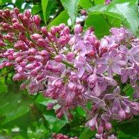 Счастливый 8-липестковый цветочек!!! Загадывайте желание-Исполнится!!!! :: Galina Dzubina