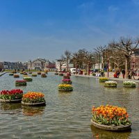 Tulips in Holland 04-2015(3) :: Arturs Ancans