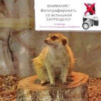 Чур! А меня нельзя фоткать! :: A. SMIRNOV