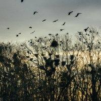 Гнездовья :: Артемий Кошелев