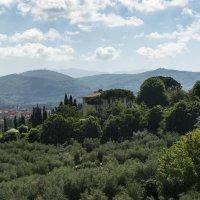 италия флоренция оливковые террасы :: Олег
