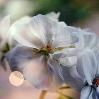 sunlight :: Катерина Чебышева