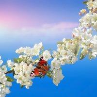 Весенний вальс :: Влад