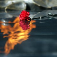 цветок в огне :: Евгений Морозов