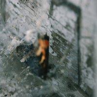 Так и погибла в паутине. :: Света Кондрашова
