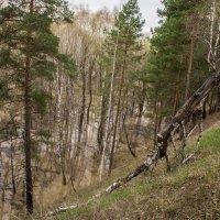Затопленный лес. :: Наталья ***