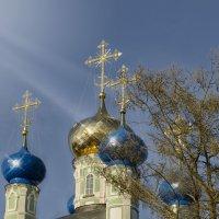 Оптинские купола :: Marina Timoveewa