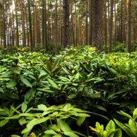 лес :: Anrijs Slišāns