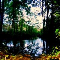 На болоте :: лена григорьева