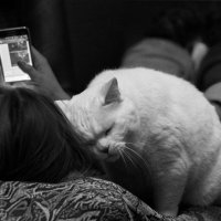 Кошачья любовь :: AVGus Anna V Guseva