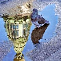 Водные процедуры... :: Зоя Авенировна Куренкова