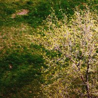 весна  /jupiter-9 f2/85mm :: Pasha Zhidkov