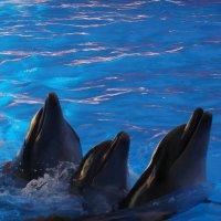 Дельфины :: Майя Стасюкевич