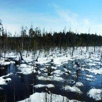 Север Карелии :: Мария Кондрашова