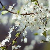 весна :: Max Flynt