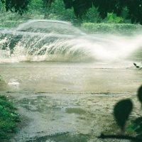 Дождливый день :: Сергей Тарабара