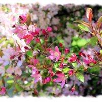 Вдыхая яблоневый цвет… :: Валентина ツ ღ✿ღ