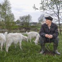 На выпасе коз. :: Анатолий Сидоренков