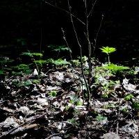 Лесной этюд :: Юрий Бондер