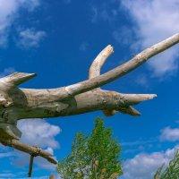Скелет динозавра :: Игорь Хворостян
