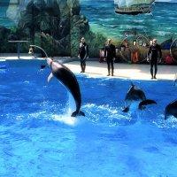 .. ШОУ в дельфинарии РИВЬЕРА .. :: Арина Невская