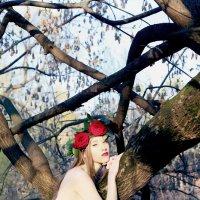 Red roses :: Райская Птица