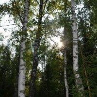 Как чудесно в лесу... :: Мария Калинина