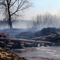 Весна горит прошлогодняя трава. :: petyxov петухов