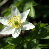 Цветущая весна :: Swetlana V