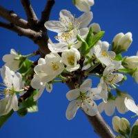 Весна :: Маргарита
