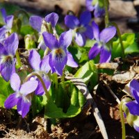 Городские цветы :: Andrad59 -----