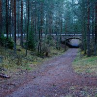 Финский лес :: Дарья :)