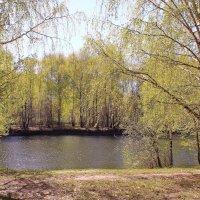 Май зеленый и нежный :: Татьяна Ломтева