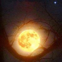 Колыбель Луны :: genar-58 '