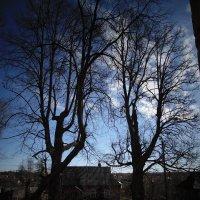 Вид из окна алтаря церкви Упения Пресвятой Богородицы. :: Людмила Ларина