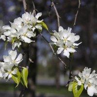весна в деталях :: Анна -