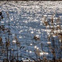 река полная солнечных зайчиков :: Galina