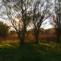 Лесная поляна :: Владилена Чуева
